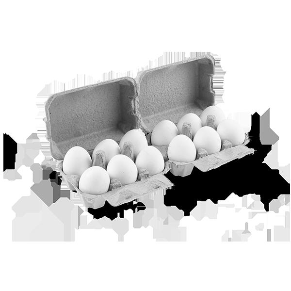 Θήκες αβγών FLATTOP 6