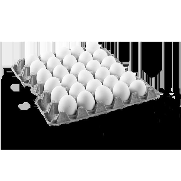 Καρτέλες αβγών 20LBS