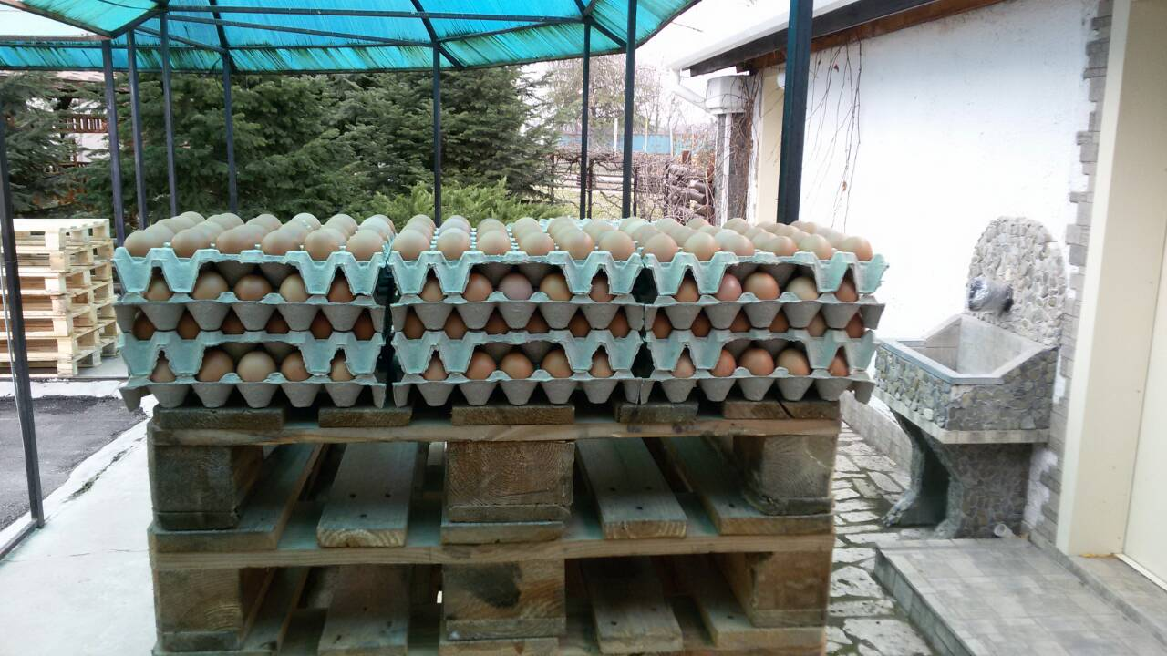 Кори за яйца ЕКО-М